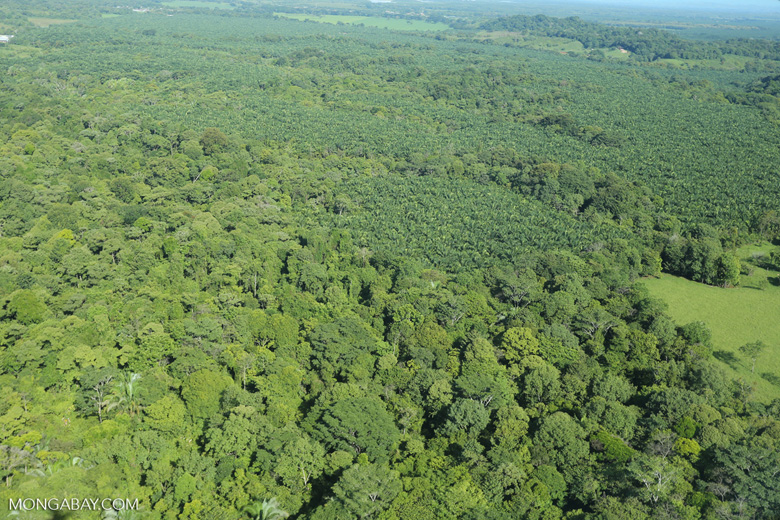 Aerial view of rainforest and oil palm plantations [costa_rica_aerial_0162]