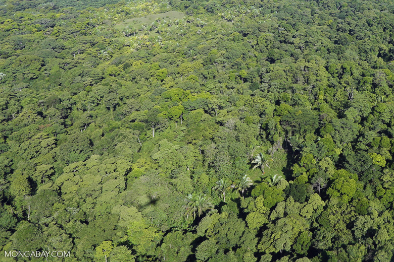 Overhead view of rain forest in Costa Rica [costa_rica_aerial_0166]