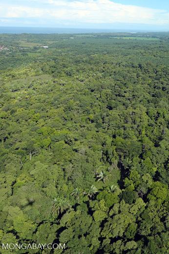 Airplane view of rainforest in Costa Rica [costa_rica_aerial_0167]