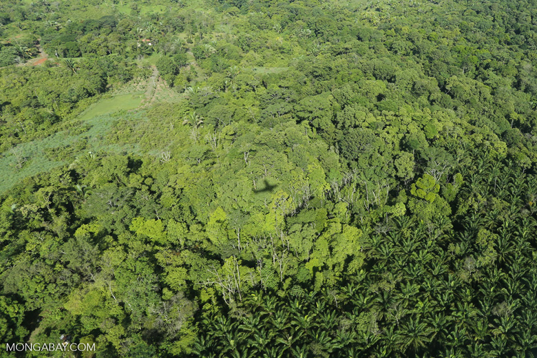 Aerial view of rainforest and oil palm plantations [costa_rica_aerial_0170]