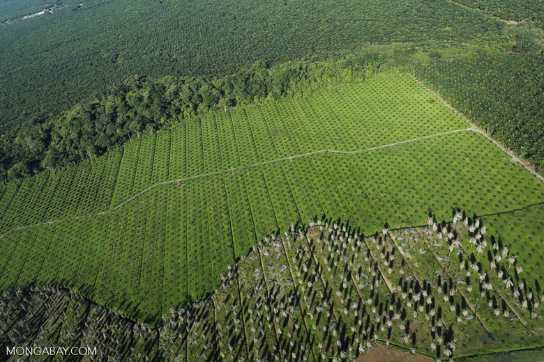 Oil palm plantation in Costa Rica [costa_rica_aerial_0210]