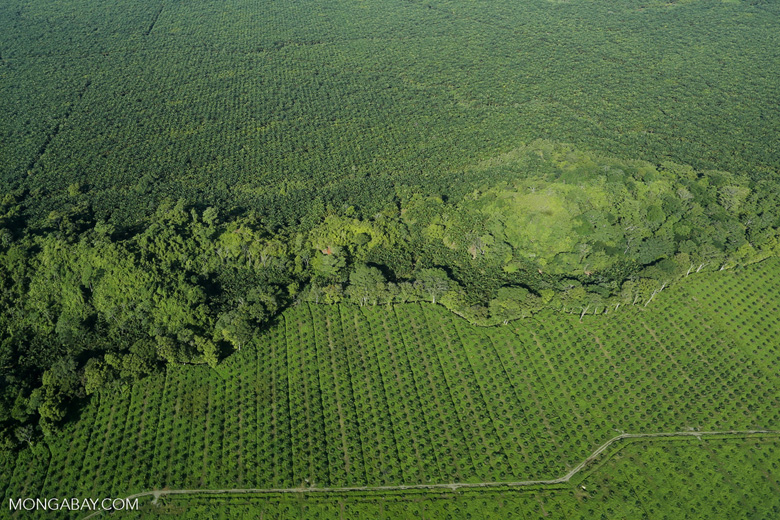 Oil palm plantation in Costa Rica [costa_rica_aerial_0224]