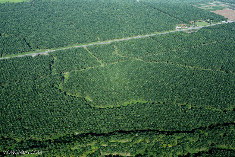 Palm oil in Costa Rica [costa_rica_aerial_0237]