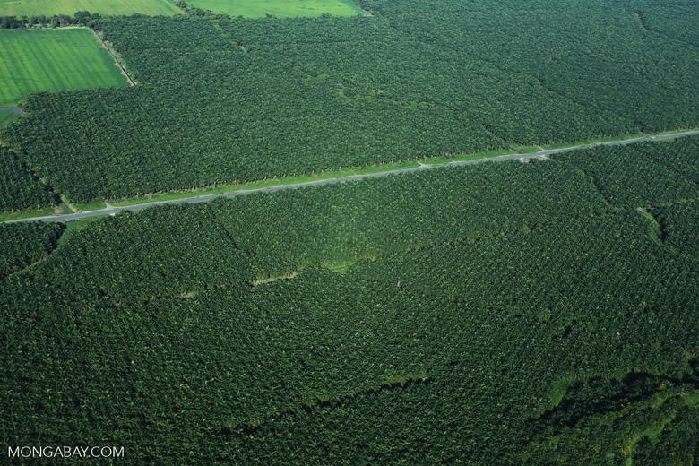 Palm oil in Costa Rica [costa_rica_aerial_0239]
