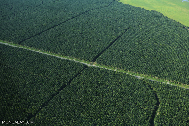Oil palm plantation in Costa Rica [costa_rica_aerial_0240]