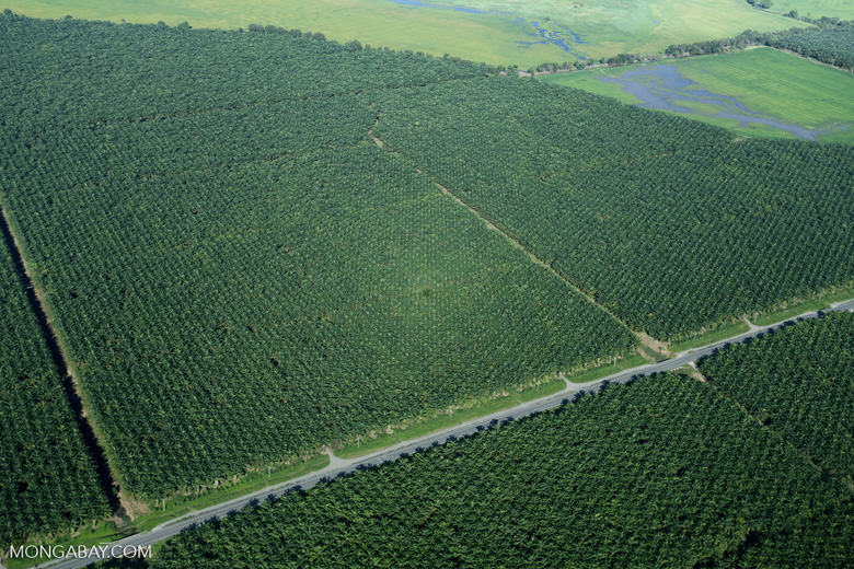 Oil palm plantation in Costa Rica [costa_rica_aerial_0244]