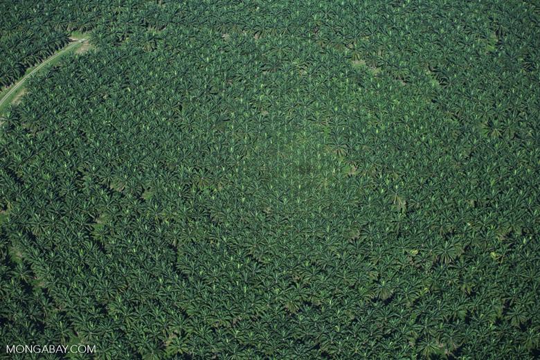 Oil palm plantation in Costa Rica [costa_rica_aerial_0250]