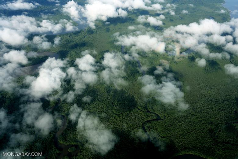 Overhead view of rainforest in Costa Rica [costa_rica_aerial_0280]