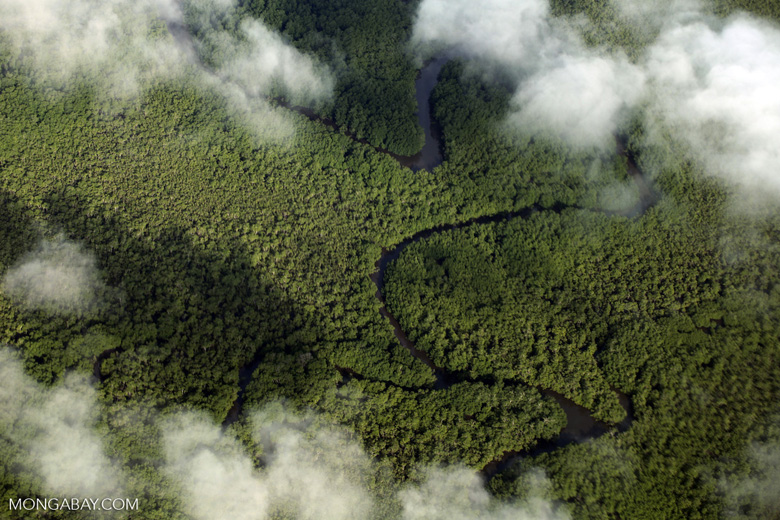 Aerial view of rain forest in Costa Rica [costa_rica_aerial_0285]