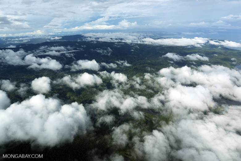 Airplane view of rain forest in Costa Rica [costa_rica_aerial_0289]
