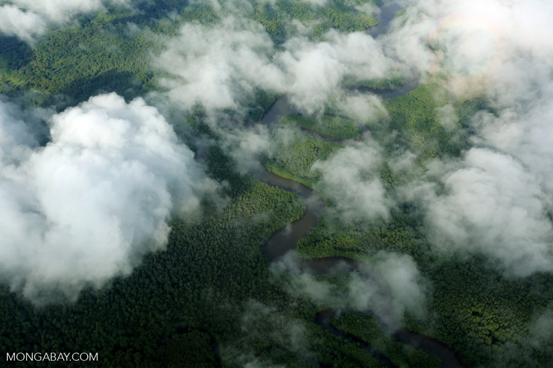 Aerial view of rainforest in Costa Rica