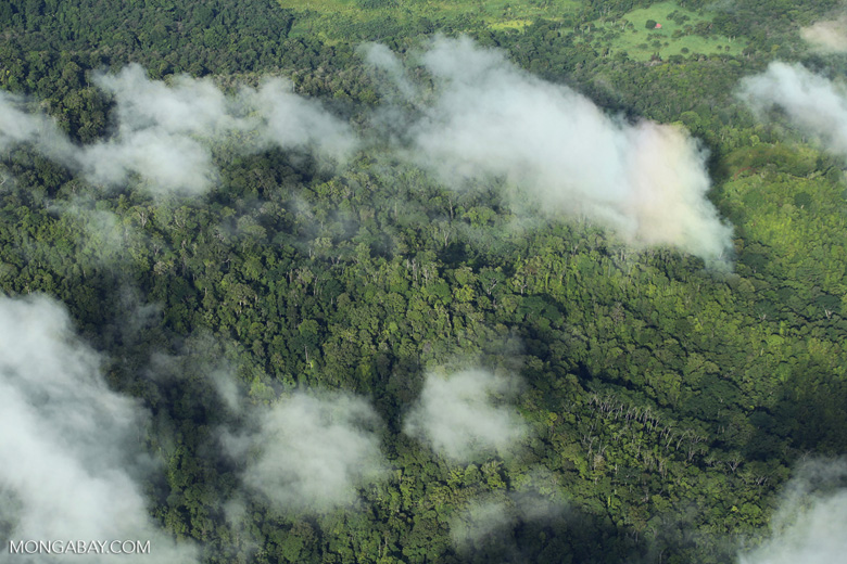 Aerial view of rain forest in Costa Rica [costa_rica_aerial_0297]