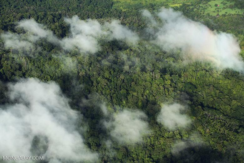 Overhead view of rain forest in Costa Rica [costa_rica_aerial_0299]