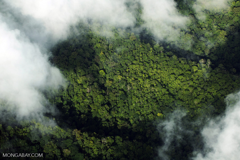 Airplane view of rain forest in Costa Rica [costa_rica_aerial_0301]
