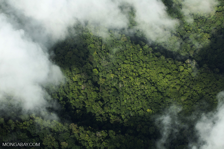 Aerial view of rain forest in Costa Rica [costa_rica_aerial_0303]