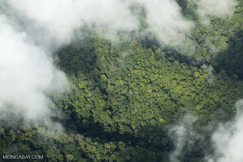 Overhead view of rainforest in Costa Rica [costa_rica_aerial_0304]