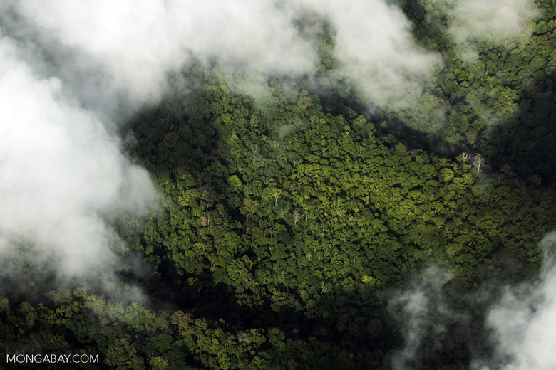 Overhead view of rain forest in Costa Rica [costa_rica_aerial_0305]