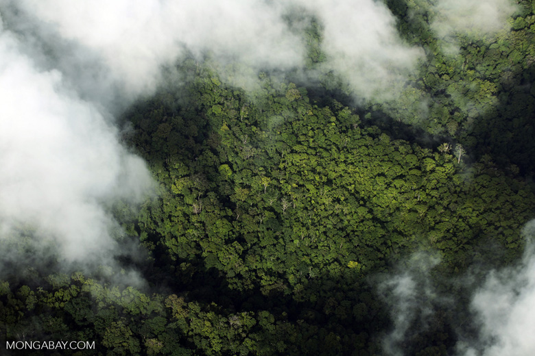 Airplane view of rainforest in Costa Rica [costa_rica_aerial_0306]