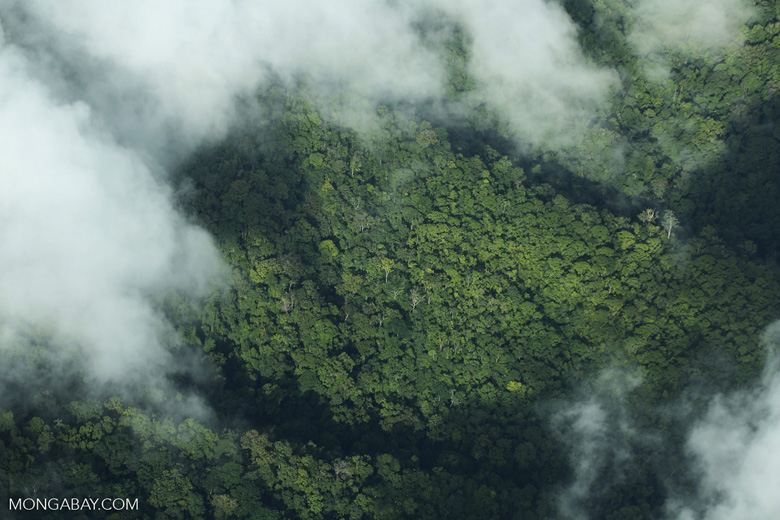 Airplane view of rain forest in Costa Rica [costa_rica_aerial_0307]