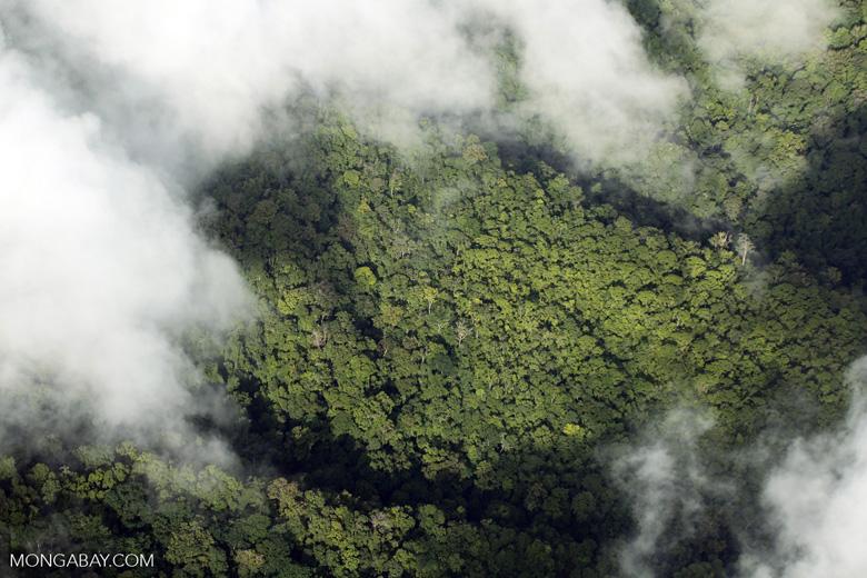 Aerial view of rainforest in Costa Rica [costa_rica_aerial_0308]