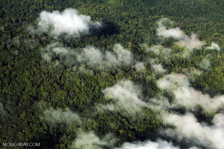 Airplane view of rain forest in Costa Rica [costa_rica_aerial_0313]