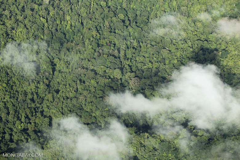 Airplane view of rain forest in Costa Rica [costa_rica_aerial_0319]