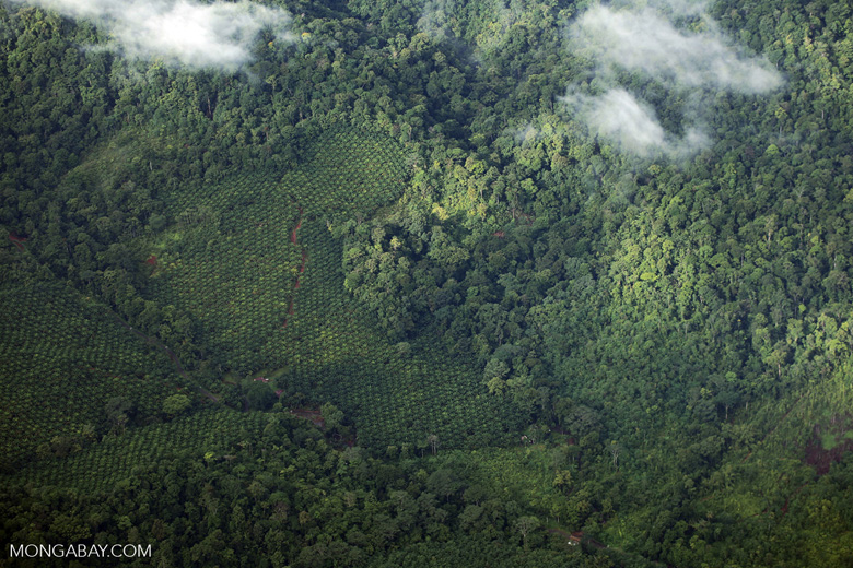 Palm oil and rainforests in Costa Rica [costa_rica_aerial_0339]