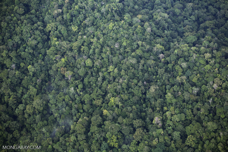 Overhead view of rainforest in Costa Rica [costa_rica_aerial_0344]