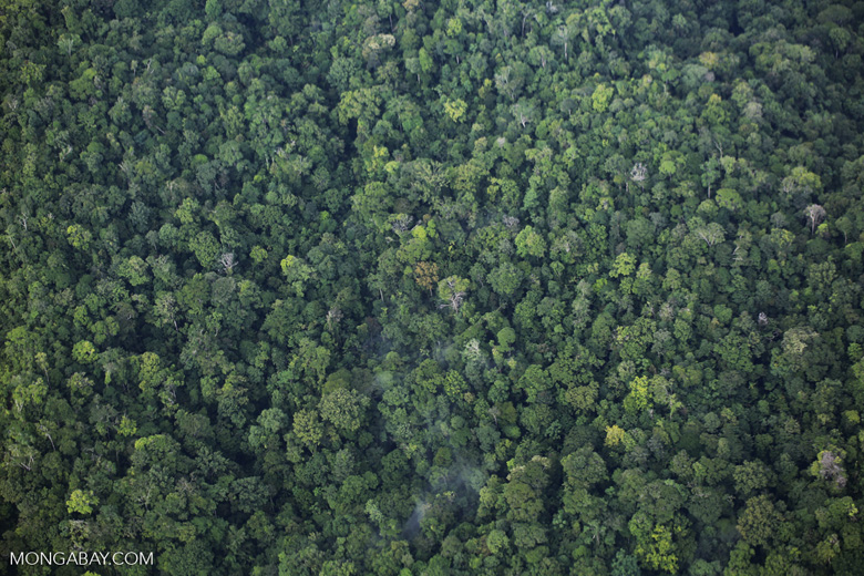 Airplane view of rainforest in Costa Rica [costa_rica_aerial_0346]
