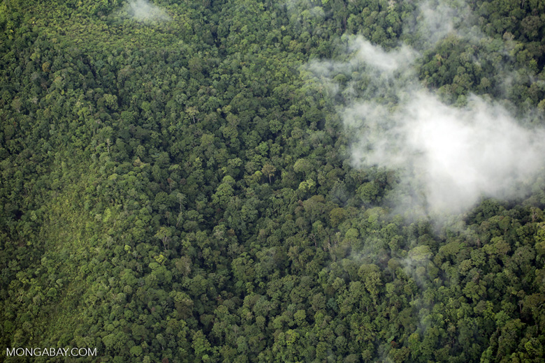 Aerial view of rainforest in Costa Rica [costa_rica_aerial_0354]