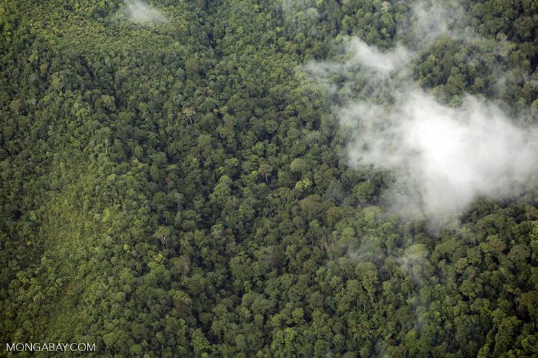 Aerial view of rain forest in Costa Rica [costa_rica_aerial_0355]