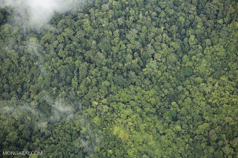 Overhead view of rainforest in Costa Rica [costa_rica_aerial_0356]