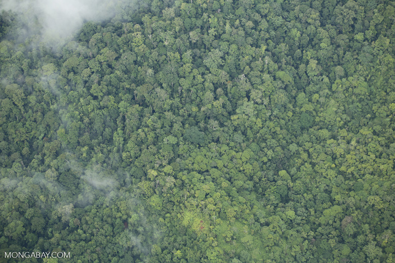 Overhead view of rain forest in Costa Rica [costa_rica_aerial_0357]