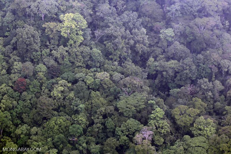 Overhead view of rain forest in Costa Rica [costa_rica_aerial_0405]
