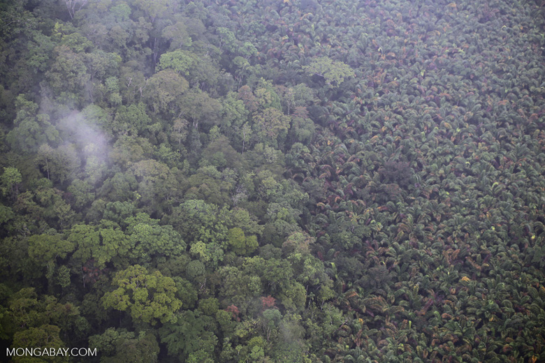 Rainforest and agriculture