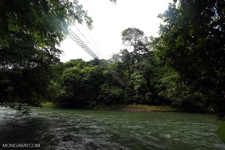 Bridge over the Sarapiquí river