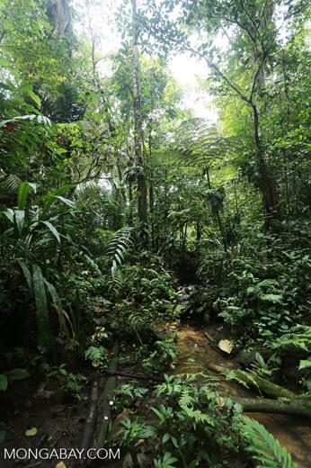 Rainforest creeks [costa_rica_la_selva_1266]