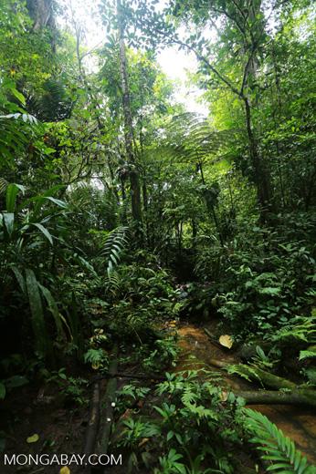 Rainforest creeks [costa_rica_la_selva_1267]
