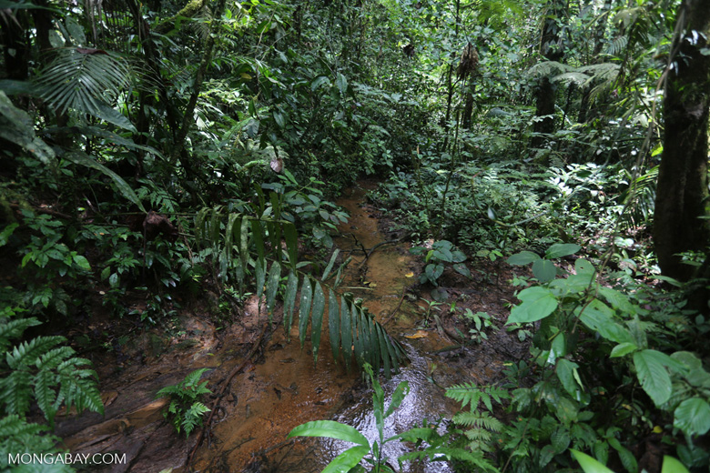 Rainforest creeks [costa_rica_la_selva_1269]