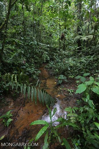 Rainforest creeks [costa_rica_la_selva_1282]