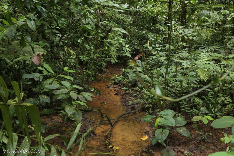 Rainforest creeks [costa_rica_la_selva_1286]