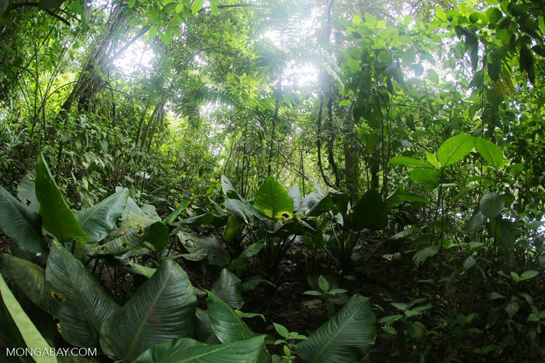 Rainforest vegetation in Costa Rica [costa_rica_la_selva_1299]