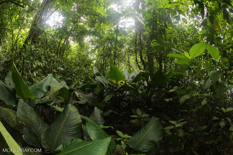 Rainforest vegetation in Costa Rica [costa_rica_la_selva_1301]