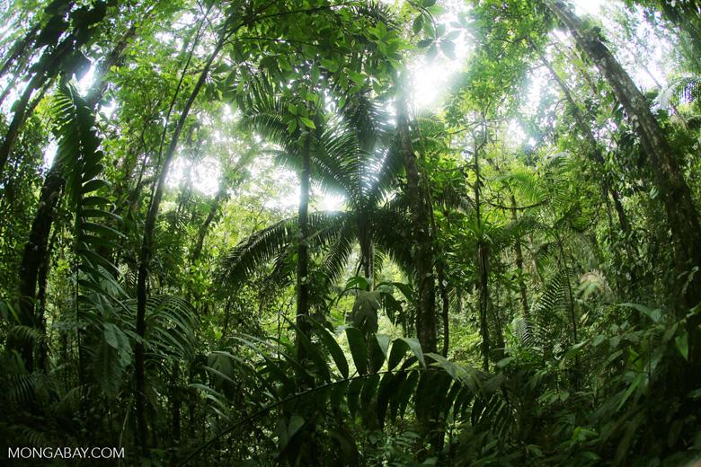 Central American rainforest [costa_rica_la_selva_1329]