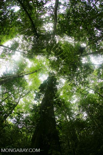 Central American rainforest [costa_rica_la_selva_1342]