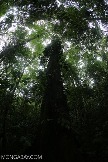 Central American rainforest [costa_rica_la_selva_1347]