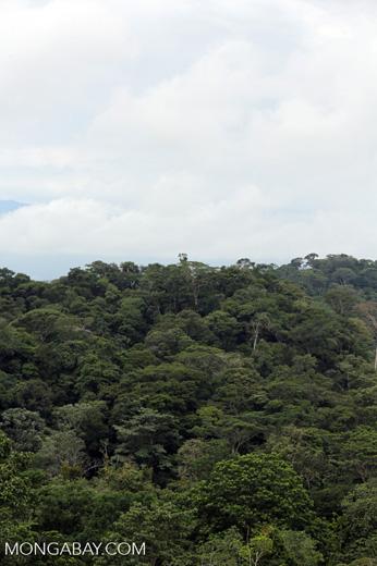 Rainforest in Costa Rica [costa_rica_la_selva_1383]
