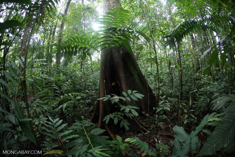 Rainforests [costa_rica_la_selva_1741]