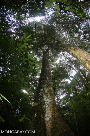 Rainforests [costa_rica_la_selva_1757]