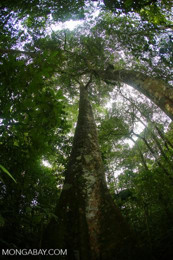 Rainforests [costa_rica_la_selva_1761]